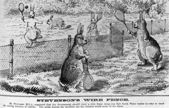 رجل تلاعب بالنظام البيئي لأستراليا فتسبب بإبادة الأرانب من البلاد! صورة رقم 1