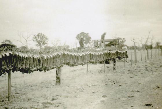 رجل تلاعب بالنظام البيئي لأستراليا فتسبب بإبادة الأرانب من البلاد! صورة رقم 4