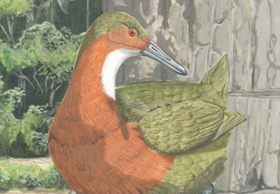 طائر غريب منقرض يعود بعد آلاف السنين من انقراضه! صور صورة رقم 2
