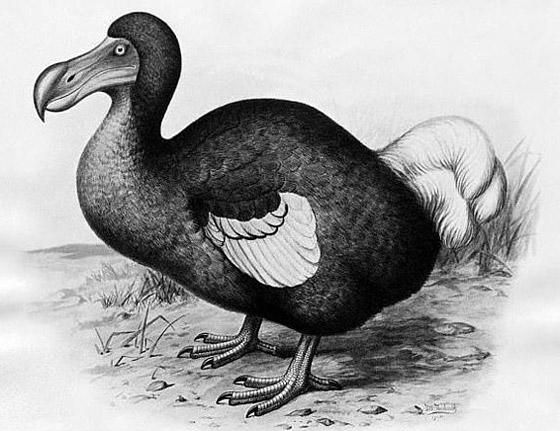 طائر غريب منقرض يعود بعد آلاف السنين من انقراضه! صور صورة رقم 7