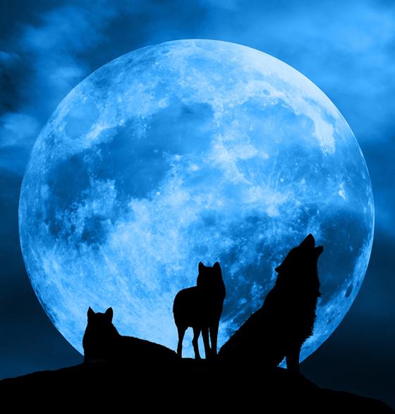 ظاهرة فلكية مثيرة يوم السبت: ترقّبوا القمر الأزرق الكامل صورة رقم 4