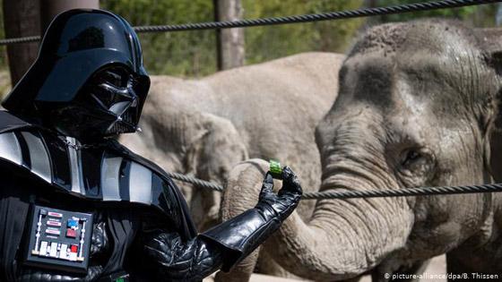 بالصور: حيوانات نادرة وغريبة في الحدائق الأوروبية صورة رقم 4