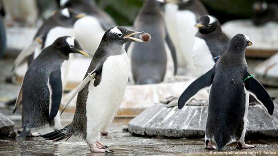 بالصور: حيوانات نادرة وغريبة في الحدائق الأوروبية صورة رقم 7