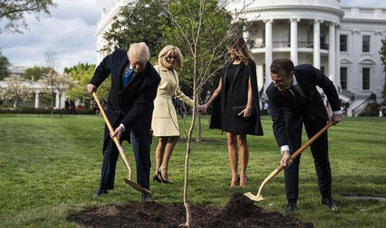 ماذا حدث بهدية ماكرون إلى ترامب؟؟! صورة رقم 6