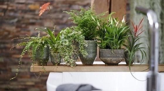 صورة رقم 6 - أفضل 5 نباتات توضع في غرفة الحمام