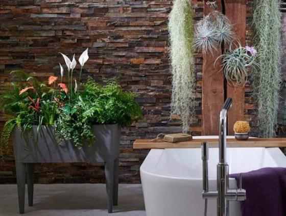 صورة رقم 2 - أفضل 5 نباتات توضع في غرفة الحمام