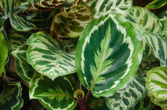 صورة رقم 3 - أفضل 5 نباتات توضع في غرفة الحمام