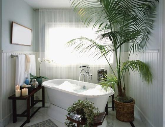صورة رقم 5 - أفضل 5 نباتات توضع في غرفة الحمام