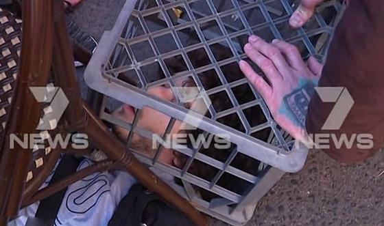 مسلح يهاجم المارة طعنا في سيدني الأسترالية وهو يهتف (الله أكبر)! فيديو صورة رقم 7