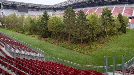 ملعب كرة قدم يتحول تماماً إلى غابة! صورة رقم 5