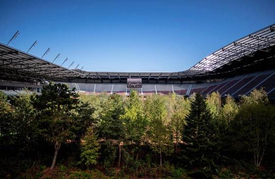 ملعب كرة قدم يتحول تماماً إلى غابة! صورة رقم 7