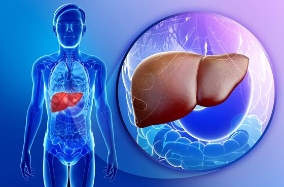 أطعمة ومشروبات مهمة لصحة الكبد صورة رقم 6