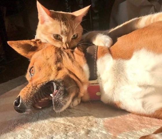 صور طريفة لتحول الحيوانات الأليفة إلى مثيري شغب صورة رقم 1