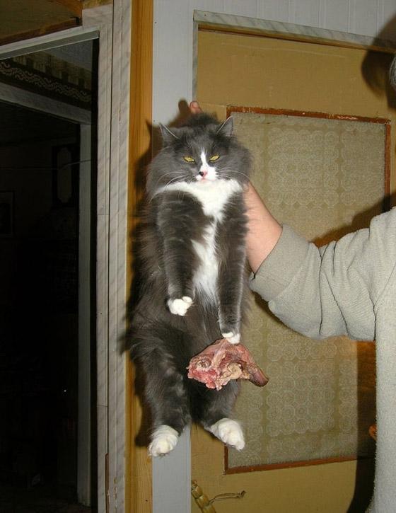 صور طريفة لتحول الحيوانات الأليفة إلى مثيري شغب صورة رقم 4