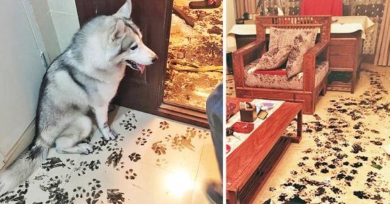 صور طريفة لتحول الحيوانات الأليفة إلى مثيري شغب صورة رقم 10