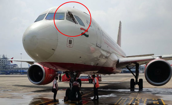 سرب من النحل يعيق إقلاع رحلة طيران هندية لساعات ويهاجم الموظفين! صورة رقم 4