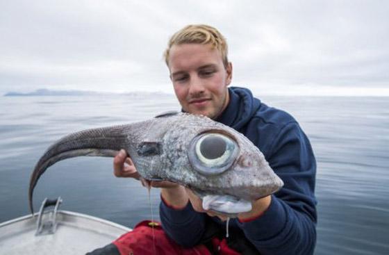 بالصور: صياد نرويجي يصطاد سمكة (الديناصور) غريبة الشكل! صورة رقم 1