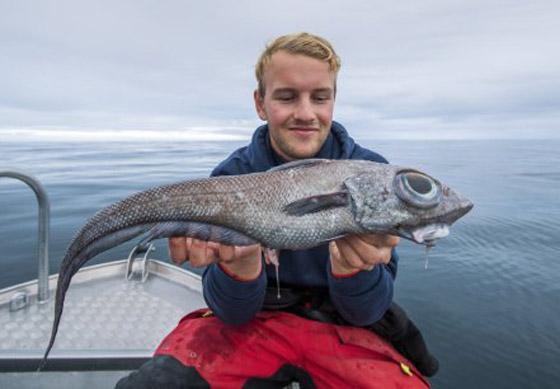 بالصور: صياد نرويجي يصطاد سمكة (الديناصور) غريبة الشكل! صورة رقم 2