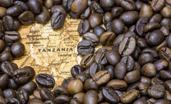 صورة رقم 2 - أفضل 8 وجهات سياحية لعشاق القهوة