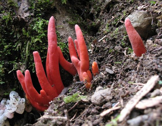 لأول مرة.. اكتشاف واحد من أخطر نباتات الفطر في العالم صورة رقم 2