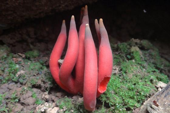 لأول مرة.. اكتشاف واحد من أخطر نباتات الفطر في العالم صورة رقم 4