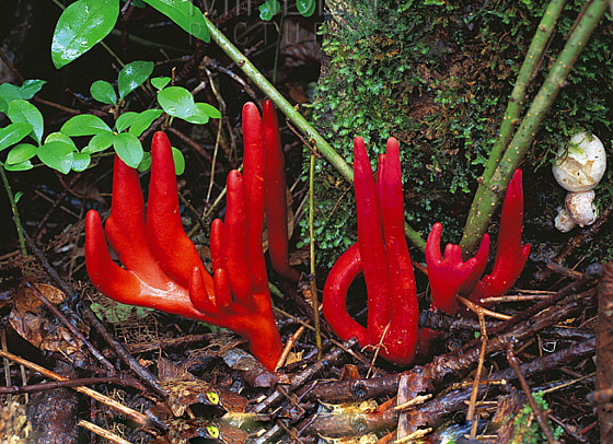 لأول مرة.. اكتشاف واحد من أخطر نباتات الفطر في العالم صورة رقم 6