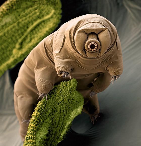حل لغز أقوى مخلوق على وجه الأرض.. كيف يتغلب على النووي؟ صورة رقم 1