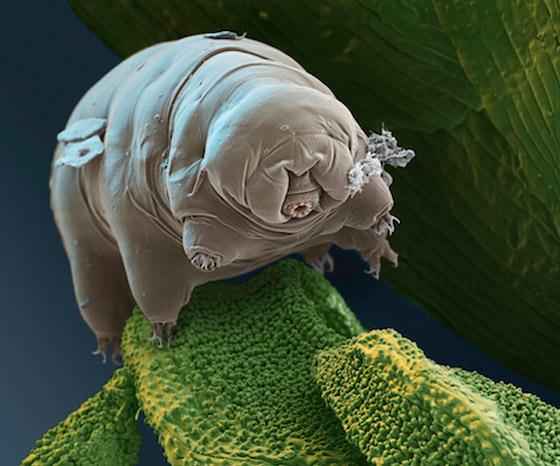 حل لغز أقوى مخلوق على وجه الأرض.. كيف يتغلب على النووي؟ صورة رقم 10