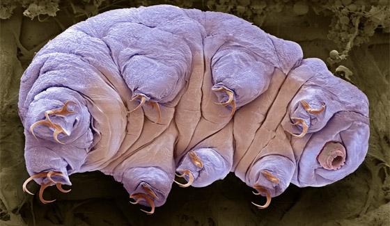 حل لغز أقوى مخلوق على وجه الأرض.. كيف يتغلب على النووي؟ صورة رقم 12