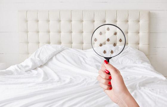 الثقة العمياء حتى بأفخرها تضر بصحتك.. إليك 10 نصائح بشأن الفنادق صورة رقم 1