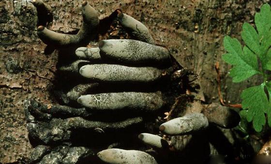 هالوين الطبيعة.. تعرفوا على أنواع غريبة ومخيفة للفطر على سطح الأرض صورة رقم 3