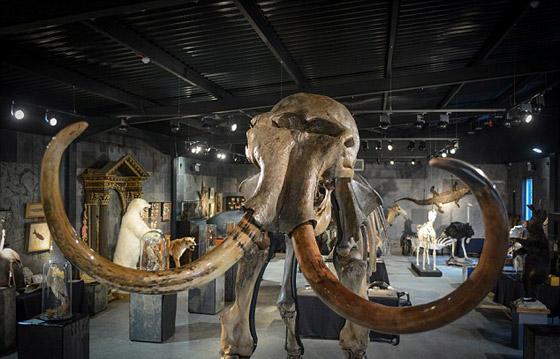 العثور على عظام حيوان عاش قبل أكثر من 140 قرنا صورة رقم 4