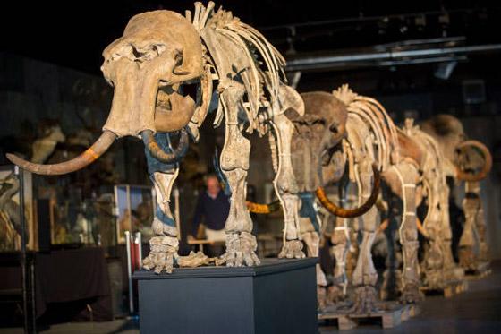 العثور على عظام حيوان عاش قبل أكثر من 140 قرنا صورة رقم 3