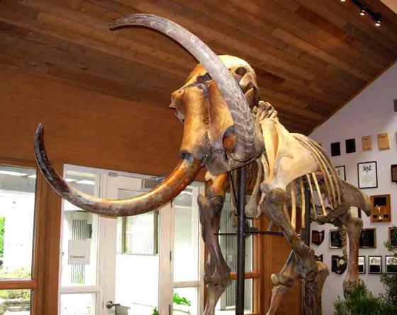 العثور على عظام حيوان عاش قبل أكثر من 140 قرنا صورة رقم 6