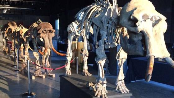 العثور على عظام حيوان عاش قبل أكثر من 140 قرنا صورة رقم 1