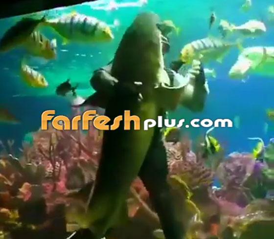 فيديو مدهش.. غواص يراقص سمكة قرش ضخمة في مشهد رومانسي مميز! صورة رقم 1