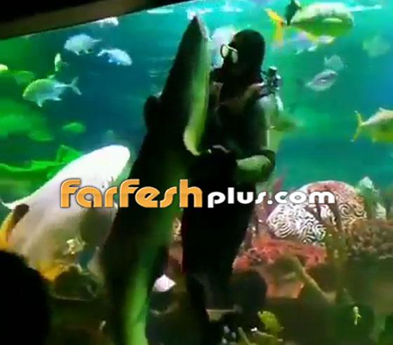 فيديو مدهش.. غواص يراقص سمكة قرش ضخمة في مشهد رومانسي مميز! صورة رقم 7