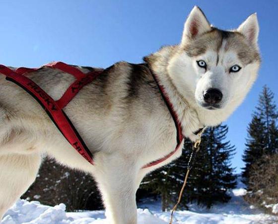 صور: تعرفوا إلى أخطر وأشرس 5 كلاب حول العالم صورة رقم 1