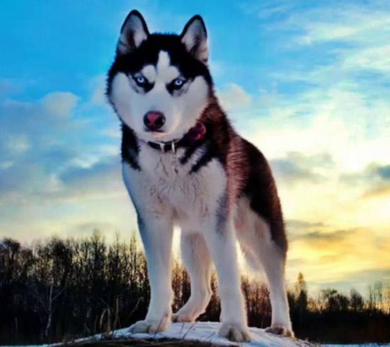صور: تعرفوا إلى أخطر وأشرس 5 كلاب حول العالم صورة رقم 2