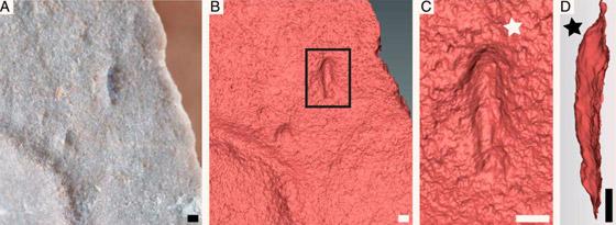 اكتشاف مخلوق صغير يشبه الدودة يعتقد العلماء أنه أقدم أسلاف البشر! صورة رقم 5