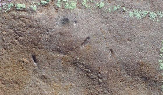 اكتشاف مخلوق صغير يشبه الدودة يعتقد العلماء أنه أقدم أسلاف البشر! صورة رقم 7