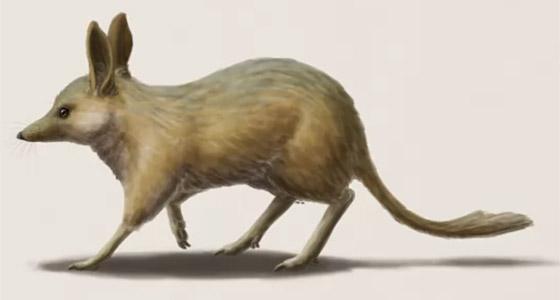 بالصور: تعرفوا إلى 12 من أصغر حيوانات ما قبل التاريخ المذهلة صورة رقم 11