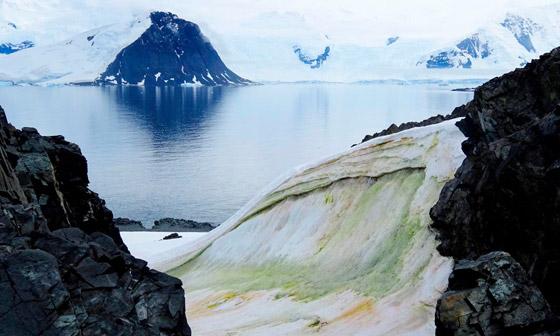 اللون الأخضر يكسو جليد القطب الجنوبي.. علماء: بداية نظام بيئي جديد صورة رقم 1