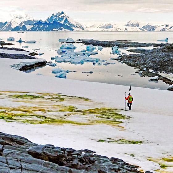 اللون الأخضر يكسو جليد القطب الجنوبي.. علماء: بداية نظام بيئي جديد صورة رقم 2