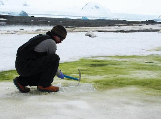 اللون الأخضر يكسو جليد القطب الجنوبي.. علماء: بداية نظام بيئي جديد صورة رقم 5