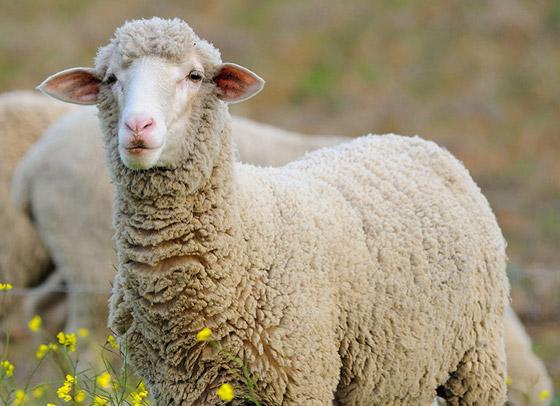 مع أي نوع من الحيوانات تتشابه شخصيتك؟ برجك يخبرك! صورة رقم 1