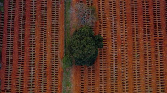 صفوف من المقابر المفتوحة.. البرازيل ثاني أكبر بؤرة كورونا! صورة رقم 3