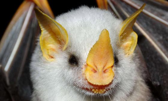 بالصور: تعرفوا إلى أغرب الحيوانات في العالم والتي تبدو من كوكب آخر صورة رقم 7
