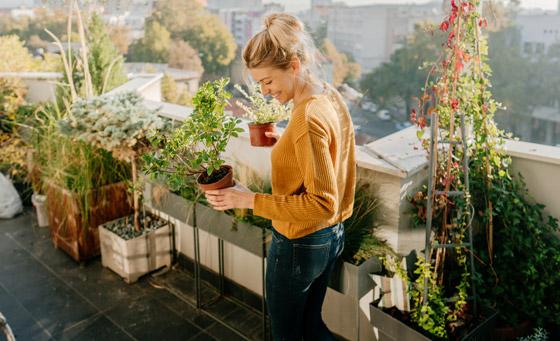صورة رقم 1 - تموت نباتاتك رغم حرصك على العناية بها؟ 5 أخطاء شائعة قد تكون السبب!