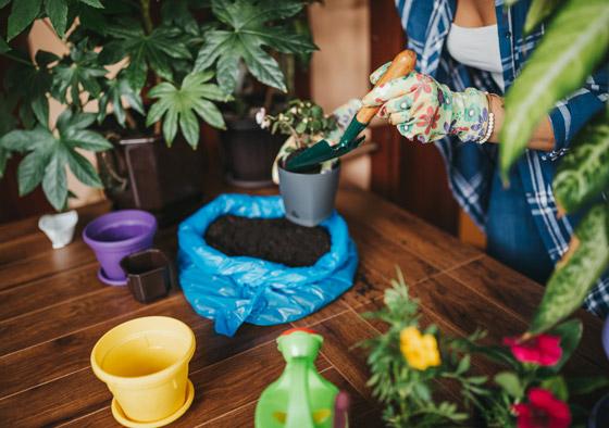 صورة رقم 3 - تموت نباتاتك رغم حرصك على العناية بها؟ 5 أخطاء شائعة قد تكون السبب!